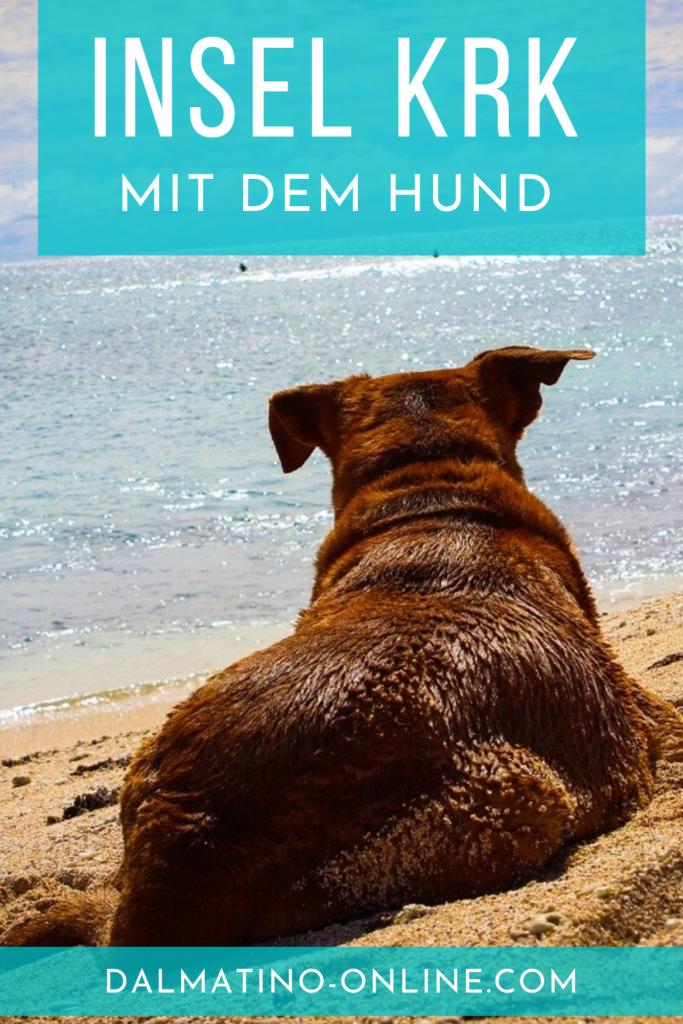 Insel Krk mit Hund 10